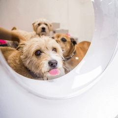 Lort Smith Launches World S Best Practice Adoption Hub Lort Smith Animal Hospital