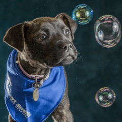 Bubbles Not Balloons As Lort Smith Joins Campaign To Protect