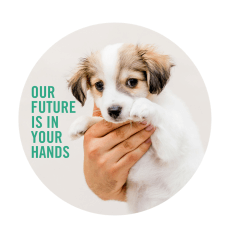 Lort Smith Launches Exciting 20 Million Capital Campaign Lort Smith Animal Hospital
