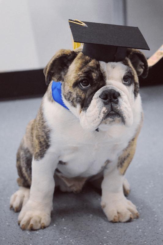 Dog Training Lort Smith Animal Hospital