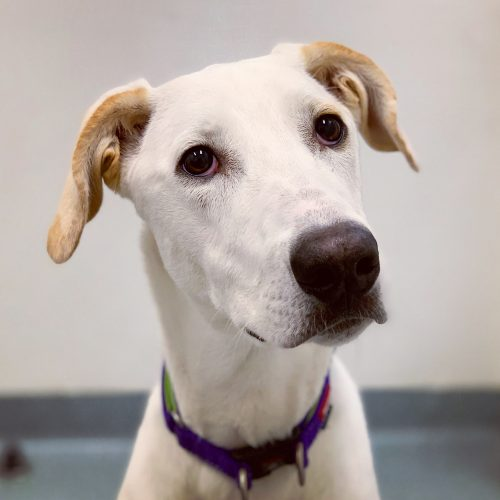 Pets available for adoption | Lort Smith Animal Hospital