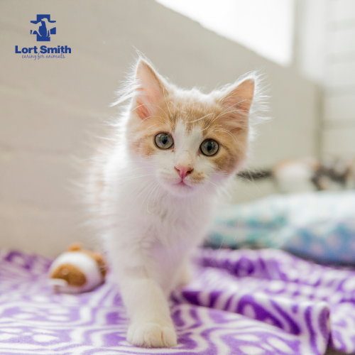 Caring For Your Cat In Quarantine Lort Smith Animal Hospital