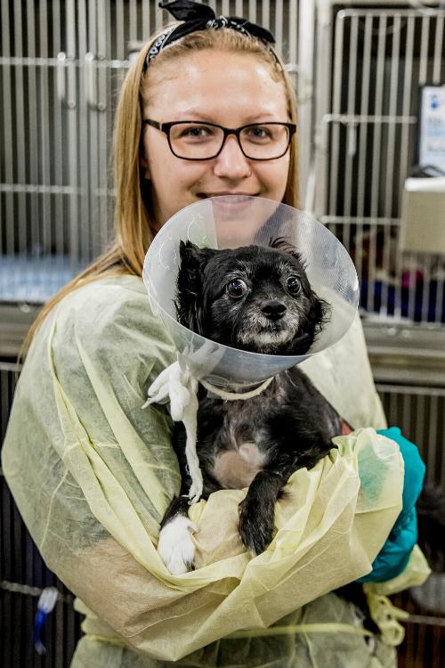 Nurse Mel Lort Smith Animal Hospital