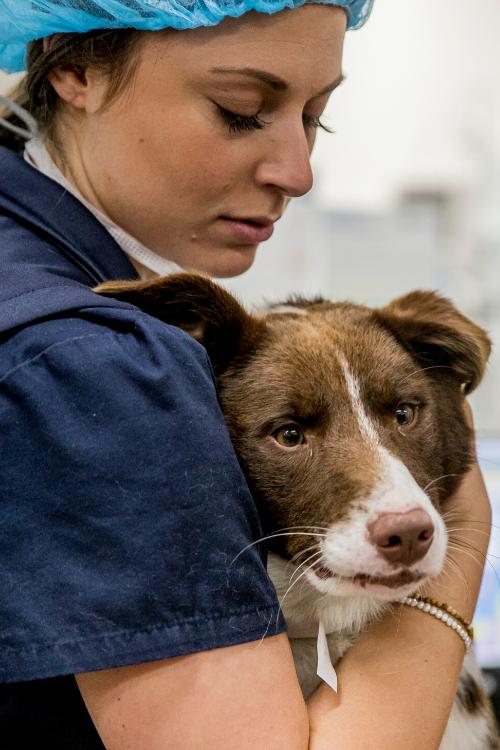 Nurse Sarah Lort Smith Animal Hospital
