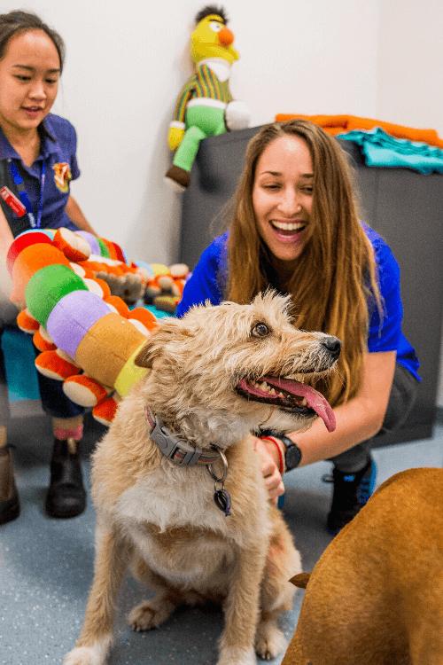 Adoption Hub Lort Smith Animal Hospital